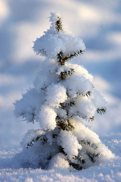 Новогоднее представление «История маленькой Ёлочки»